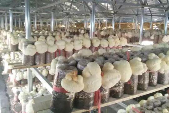 哈尔滨市某猴头菇基地烘干项目