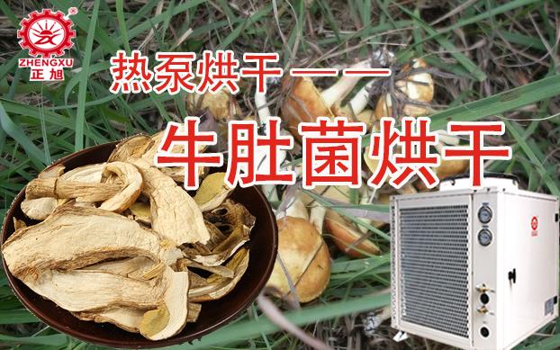 牛肚菌空气能热泵烘干机