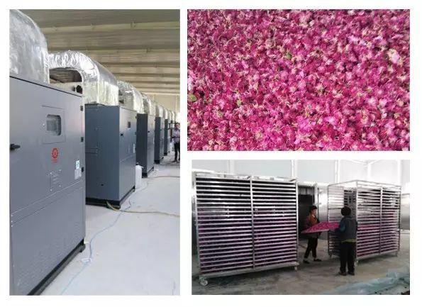 玫瑰花空气能热泵烘干机