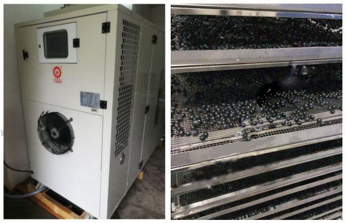 钱柜娱乐蓝莓热泵烘干机