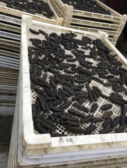 山东蓬莱海参热泵烘干项目
