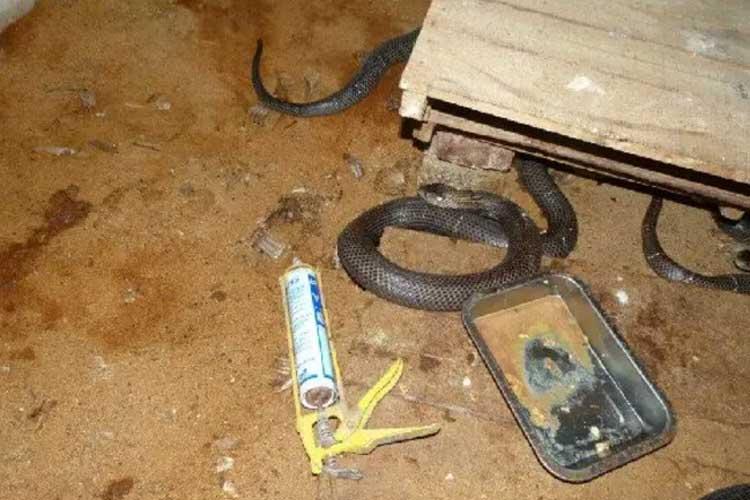 空气能蛇养殖采暖机组空气能热泵采暖畜牧采暖空气能养蛇采暖项目案例图片